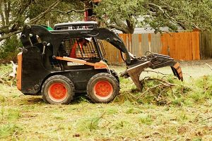 Bobcat in action