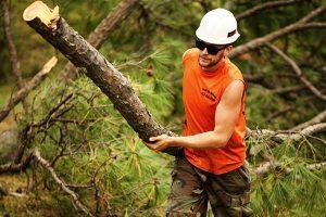 Tree Service work